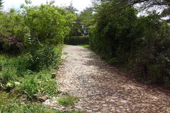 Stone pathway. Stone path way in the leafy area Stock Photography