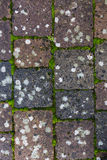 Stone pathway texture Royalty Free Stock Image