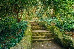 Stone Pathway Walkway Lane Path With Green Trees Royalty Free Stock Images