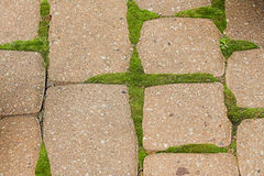 Stone patio. Stones with moss in cracks stock photo