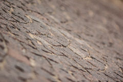 Stone pattern of the outdoor floor stock photography