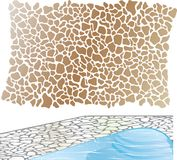 Stone pattern Vector element file Swimming Pool Royalty Free Stock Image