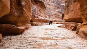 Stone paved Al Siq passage to ancient Petra city Stock Images