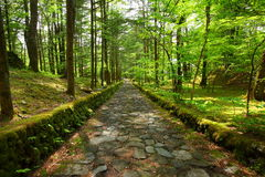 Stone paved road. In forest Stock Photo