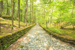 Stone paved road in forest Royalty Free Stock Images