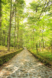 Stone paved road in forest. Happy Valley, Karuizawa, Nagano, Japan Royalty Free Stock Photo