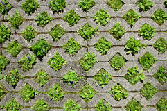 Stone pavement background Royalty Free Stock Photography