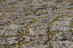 Stone pavement closeup with joints, split and a little bit of gr Royalty Free Stock Images