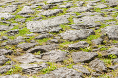 Stone pavement. Closeup of stone walkway with small herbs Royalty Free Stock Photos