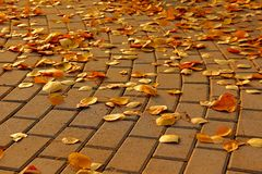 Stone pavement in golden autumn leaves Stock Images