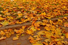 Stone pavement in golden autumn leaves Royalty Free Stock Images