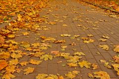 Stone pavement in golden autumn leaves Royalty Free Stock Photos