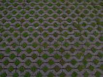Stone Pavement with Green Grass Royalty Free Stock Photos