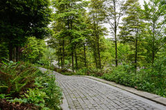 Stone pavement on hillside in spring woods Royalty Free Stock Photo