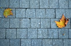 Stone pavement texture background. With autumn leaves stock image