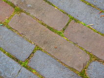Stone paving with moss Stock Photography