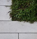 Stone paving next to green vegetation Royalty Free Stock Photography