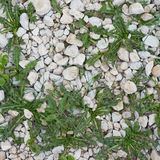 Stone pebble and grass Stock Image