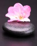 Stone and petal Stock Photos