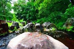 A stone and petal. In Osaka Japan royalty free stock image