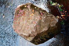 A stone and petal Stock Photo