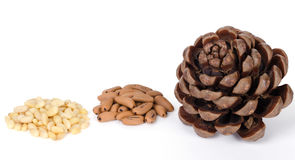 Stone pine cone with seeds and shelled nuts Royalty Free Stock Images
