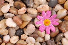 Stone and pink flower Stock Images