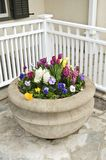 Stone planter with spring flowers Royalty Free Stock Photography