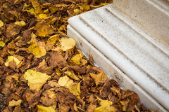 Stone plinth surrounded by yellow autumn leaves. Stone plinth surrounded by yellow autumn leaves abstract detail closeup Royalty Free Stock Image