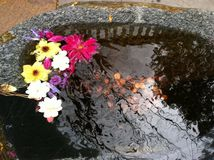 Stone pool with flowers and pennies Stock Image