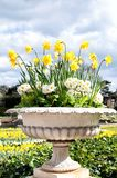 Stone pot of daffodils and primroses in the park Stock Photo