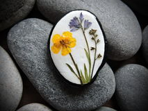 Stone with pressed flowers Stock Images