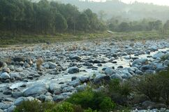Stone in River Flowing Water HP India