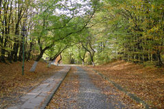 Stone_road_autumn_forest Photos libres de droits