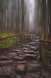 Stone road in forest Royalty Free Stock Photo