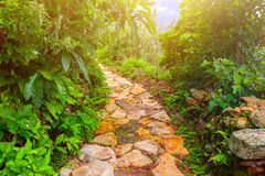 Stone road in Nepal Royalty Free Stock Photography