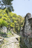 Stone road and Old camphor tree Royalty Free Stock Image