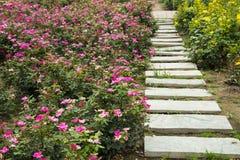 Stone road, rose flower Stock Image