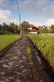 Stone road surrounded by rice fields, Bali Royalty Free Stock Image