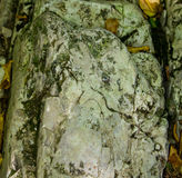 Stone of the rock boulder covered with moss uneven pristine natural Royalty Free Stock Photos