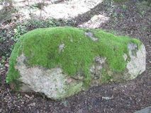 Stone. Rock covered with moss Royalty Free Stock Image