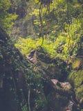Stone rock deep in green jungle Stock Photo