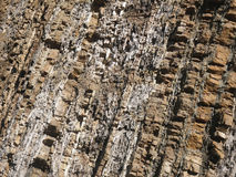 Stone rock surface. Brown stone rock surface with diagonal lines Royalty Free Stock Photo