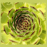 Stone rose vector Royalty Free Stock Image