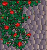 Stone and roses. Stone wall, overgrown with red roses, green leaves Stock Photography