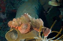 stone ryb Zdjęcie Royalty Free