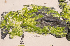 Stone, sand and seaweed Stock Photography