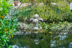 Stone sculpture of a flower in the artificial lake among the lilies and vegetation with algae in park at Villa Pamphili in Rome, c Royalty Free Stock Photography