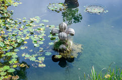 Stone sculpture of a flower in the artificial lake among the lilies and vegetation with algae in park at Villa Pamphili in Rome, c Stock Images