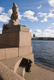 The stone sculpture of the sphinx Stock Photography